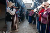 It looks like a line dance... actually, these parishioners are tamping down a newly-laid temple floor in Tsetang