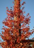 Day 20 - Fall Color Behind Easthampton's Mills