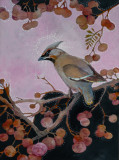 Acrylic painting of a Waxwing on bushes.