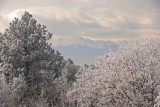 2017-03-Topic-FrostyVista