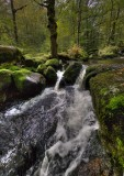 Promenade le long du ruisseau
