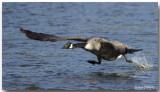 Les Marais et leurs Oiseaux - Marshes and their Birds
