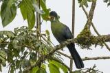 Ethiopian Birds