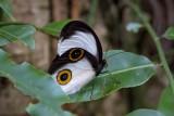 PNG Invertebrates