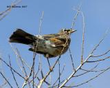 5F1A9405 Robin.jpg