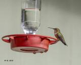 5F1A0790 Rufus Hummingbird.jpg