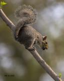 5F1A2637 Squirrel.jpg