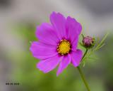 5F1A2994 Wildflower.jpg