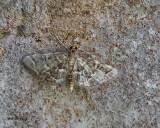 5F1A3122 moth.jpg