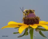 5F1A8846_Longhorn_Bee_.jpg