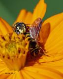 5F1A9101_bees_.jpg