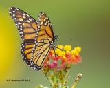5F1A3680_Monarch_.jpg