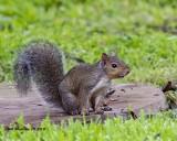 5F1A4405_Squirrel_.jpg