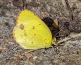 5F1A4725_Little_Yellow_.jpg