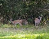 5F1A4880_Deer_.jpg