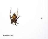 5F1A5874_Spider_.jpg