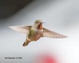 5F1A7176_Annas_Hummingbird_.jpg