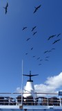 Frigate Birds over the Galapagos Legend