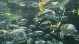 San Diego Zoo Hippo Pool Fish