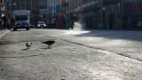 Truk Street Pigeons