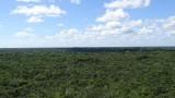 Mayan Jungle