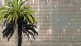 de Young Museum Palm Tree