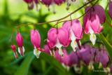 Flora, Greenery, Foliage