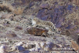 Wildlife trip to India (Feb-March 2017)