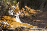 Tigers and Birds of Bandhavgarh National Park