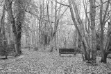 Bench in the wood, December 2018.jpg