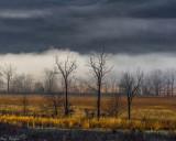 Fog Band Across a Field