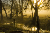 Fog in Morning's Golden Light