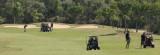 AAPA-2017-Golf-493.jpg