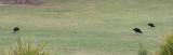 AAPA-2017-Golf-633.jpg