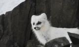 Memories from Svalbard 2018