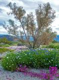 Anza-Borrego Desert State Park, CA