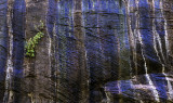 Algae, iron stains, blue sky reflections,  and clacium carbonate on grotto wall, Zion Canyon, Zion National Park, UT