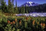 Mount Rainier,  a composite cone, Mt. Rainier National Park, WA