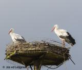 Paar rust op nest .