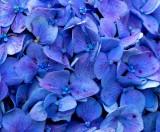 Macro in Blue