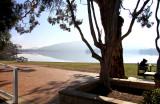 Tree and Hazy Lake