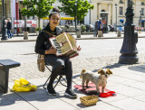 The Accordion Player -T