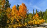 Glowing Fall Colors -L
