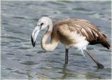 Flamingo JV