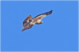 Booted Eagle Light