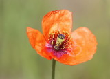Landscapes, Flowers and Insects