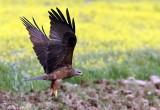 Birds seen in Extremadura Spain