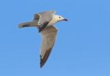 Gulls and Tern