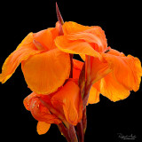 Orange splendor