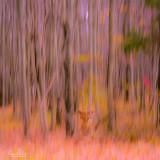 Fox in forest fantasy